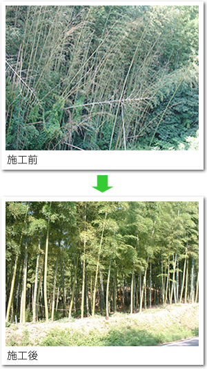 img_bamboo_01